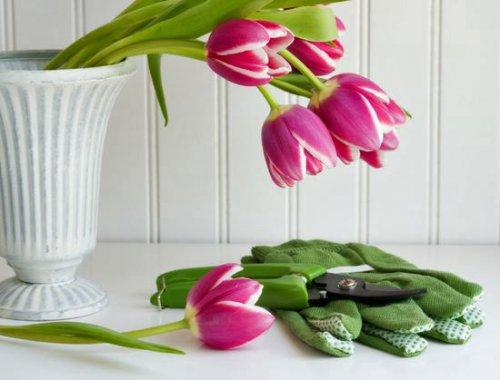 Как реанимировать и продлить жизнь цветам в вазе?